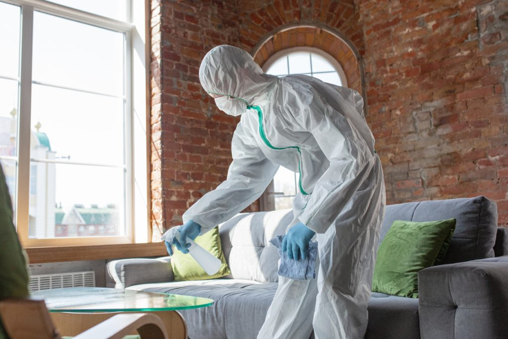 mold remediation specialist
